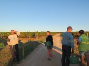 Getting ready for early a.m. picking Noellat HCDN Chard plot
