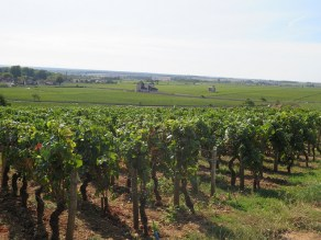 View over Vougeot Chambolle Amoureuses vines in foreground