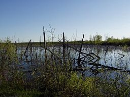 Ellice Swamp, Perth County Ontario