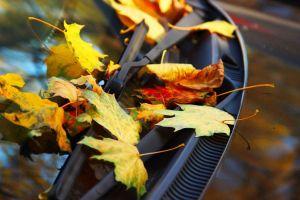 fall-car
