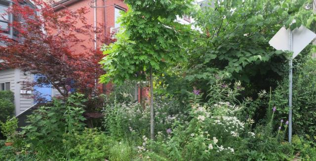 Lorraine Johnson and Pam Ward's naturalized front garden