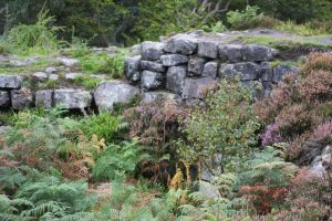 wall of the broch over grown with bracken, heather and seedling birch