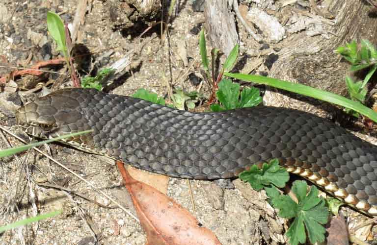 Tödliche Tiere Australien