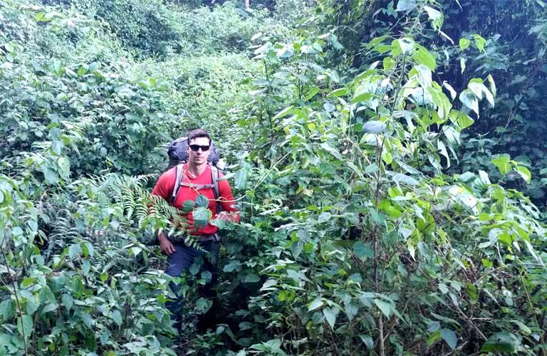 Magamba Rain Forest Lushoto Usambara Mountains