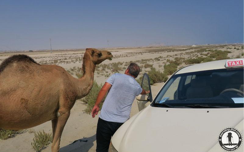 Queshm Island Iran Geopark Qeschm Sehenswürdigkeit
