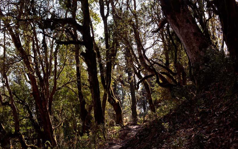 Wald Nepal Mardi Himal Trek Nepal Trekking Annapurna Conservation Area