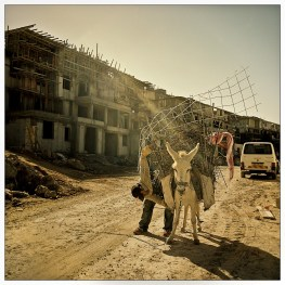 Amin, a Palestinian worker loads his donkey to carry construction materials for the building of the settelment of Beitar Ilit.