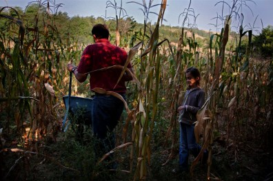 A Serbian family working their farm land in a Kosovo village.
