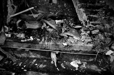 Pakistan June 2009, NWFP, Peshawar: A cat looking for food in a shop destroied by a suicide blast.