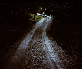 A dirt road leading to a small indoor marijuana farm in California's Humboldt County.