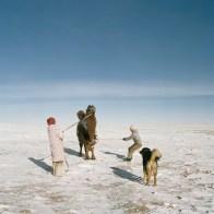 Mongolia, Gobi, Omongovi, 2013 Tuvshinbayar is tying Tuvshinbayar and his wife are tying the camel to kill himand sell the meat.