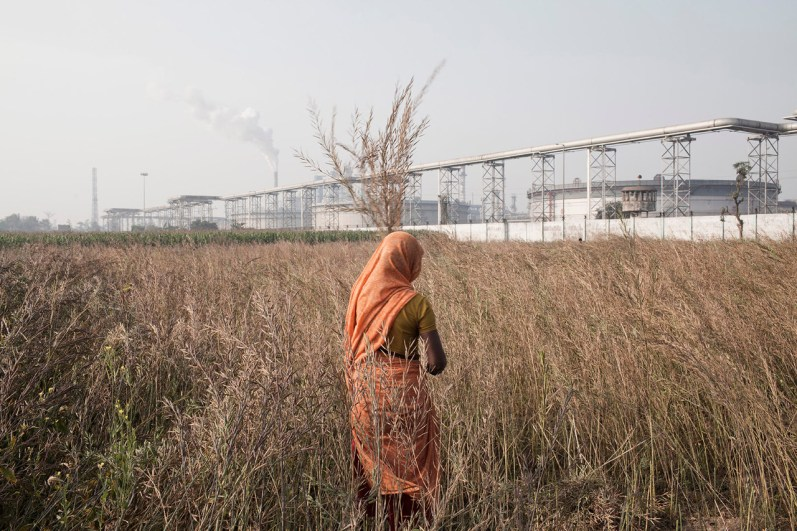 Woman collects mustard leaves in a field accross a Oil refinery along the Ganges, feb 2014.