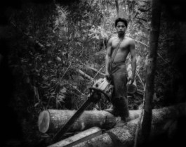 Gunung Palung Nat'l Forest is one of the last protected refuges for orang utans. This young illegal logger has been lent a chain saw for the merchant in town who sells the timber. Illegal loggers have penetrated deep into the park. On a five hour hike, one way, into an orang utan research center within the park, four hours of the hike were through illegally logged forest.