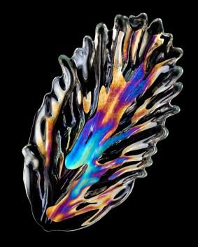 Light Study, Leaf Shaped Glass, 2017