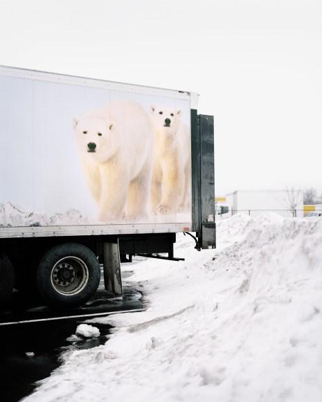 6 - Polar © Bears - 661ca93f-24f3-48dc-a3db-9a60609a0092