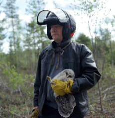 The last wild ones - a ringer man and a young Ural owl.