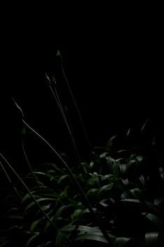 PLANTARIUM_16
