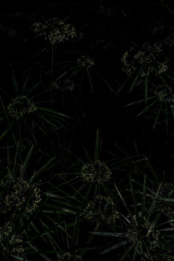 PLANTARIUM_24