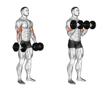Dumbbell Curls: One Of The Best Basics For Better Biceps