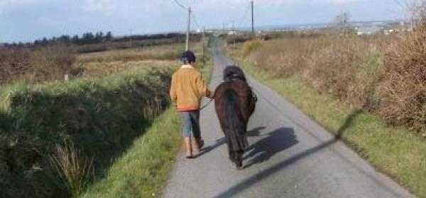 One of the younger Helping Hands volunteers doing his bit for one of the Burren Animal Rescue ponies