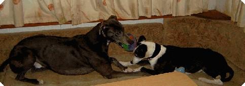 Promoting greyhounds as pets