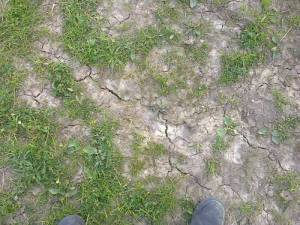 Photo taken today in one of our fields showing no grass growth & cracks in the soil