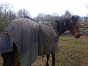Billy ... discarded racehorse