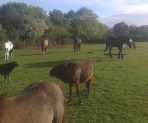 rescue horses at Burren Animal Rescue