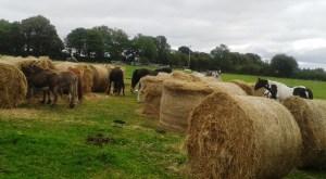 Killura Agri Hay Delivery 4-9-15