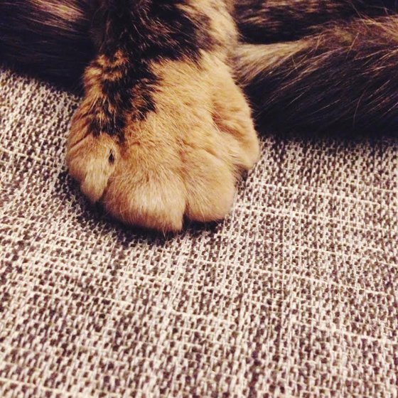 the cutest paw in the world
