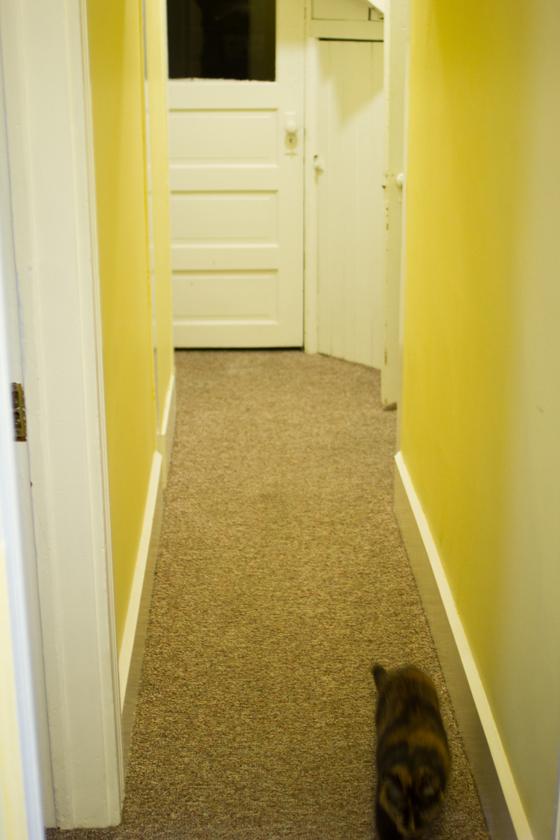 carpet before