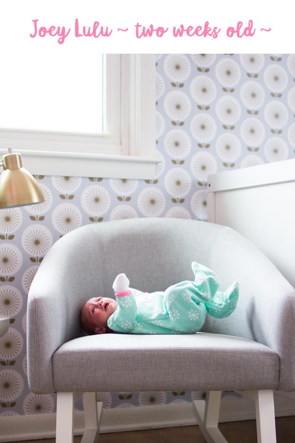 Joey Lulu - two weeks old
