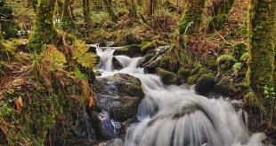 cascada en el bosque