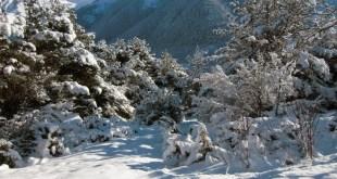 El bosque de Baricauba nevado