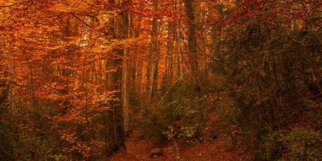 El bosque del Betato