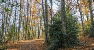 El Castañar de Honfría en otoño