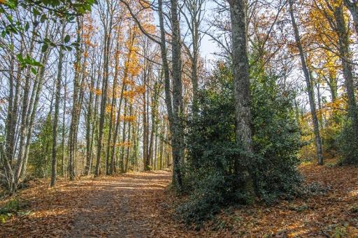 El castañar en otoño