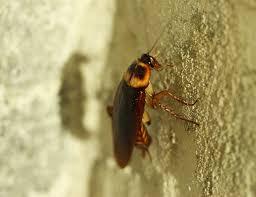roach on wall