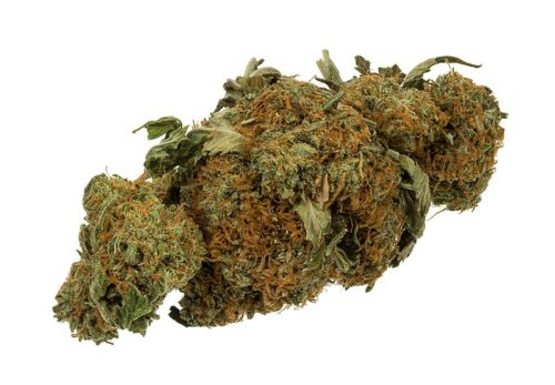 A dried flower bud of the Cannabis plant used as medical cannabis