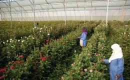 a flower farm business