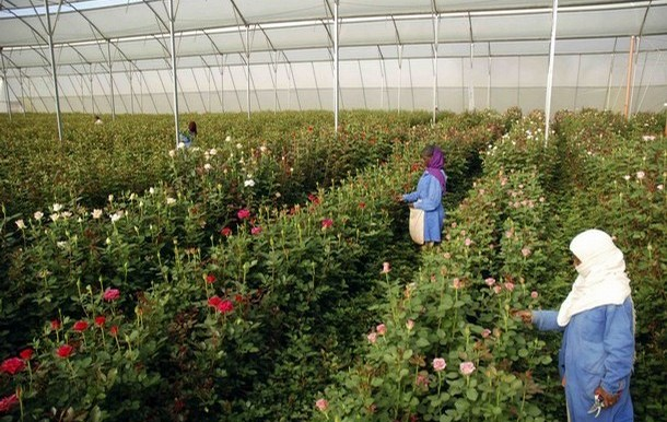 a flower farm business