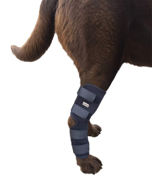 Labra Extra Supportive Dog Canine Rear Leg Hock Joint Wrap Protects Wounds