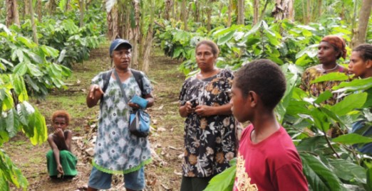 An extension officer explaining effective management of cocoa blocks and containing the cocoa pod borer in East New Britain Province. Credit: Paul Barker