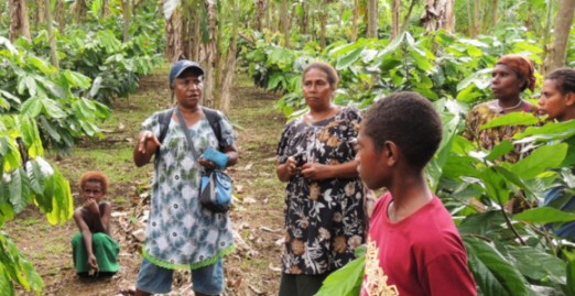 Training growers on the management of the cocoa pod borer in East New Britain Province. Credit: Paul Barker