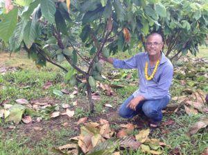 Bougainvillean Lauta Atoi checking his cocoa trees.Courtesy: Aloysius Laukai.