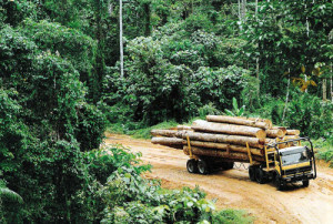 Logging in progress. Credit: PNG Forest Industries Assoc