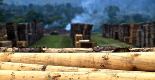 PNG Forest Products in Buololo. Credit: Ian Neubauer