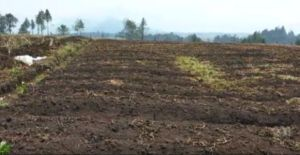 Impact of 2015 Papua New Guinea drought may be worse than 1997, reports agricultural scientist