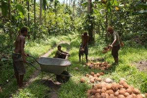 An operation with smallholder groups has been critical for Niugini Organics. Credit: Jody Cleaver.