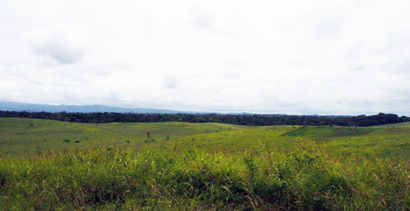Some of the land that will be developed for the Sepik Sepik Chicken, Grain and Cocoa Innovation joint project. Credit: Lutz Heim.